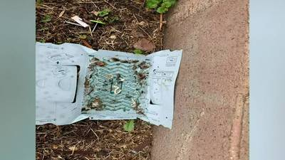 Donora residents report street overrun with roaches