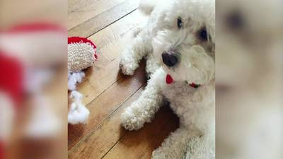 4 former Pittsburgh PetSmart employees charged in death of toy poodle