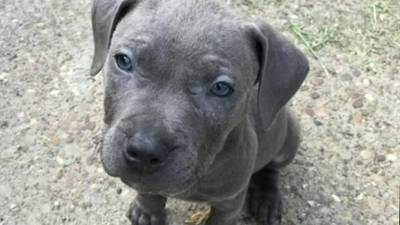 Puppy and cash stolen from McKees Rocks home during home invasion