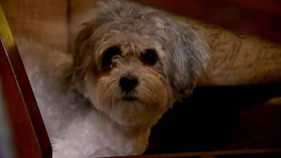Community helps woman recover furry friend after dog stolen during carjacking in Pittsburgh