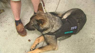 Multi-million dollar facility being built locally to train dogs for veterans